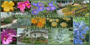 Water Wise Gardening in the Bay Area