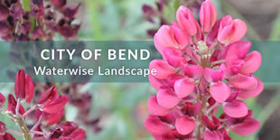 Bend Water Wise Gardening