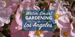 Los Angeles CAW Water Wise Gardening