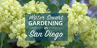 California Friendly Gardening for San Diego CAW