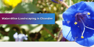 Water Wise Landscaping in Chandler, Arizona