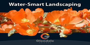 Water-Smart Landscaping in Glendale AZ