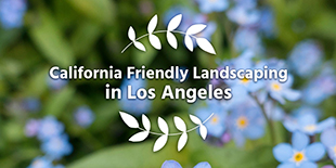 Los Angeles DWP Water Wise Gardening