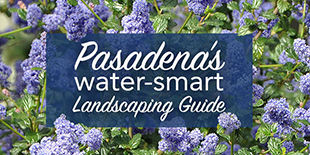 Water Wise Gardening in Pasadena