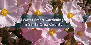 Water Wise Gardening in Santa Cruz County