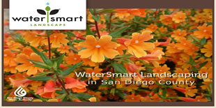 California Friendly Gardening for San Diego