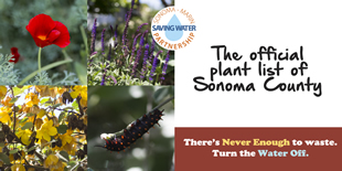 Water Wise Gardening in Sonoma and Marin Counties